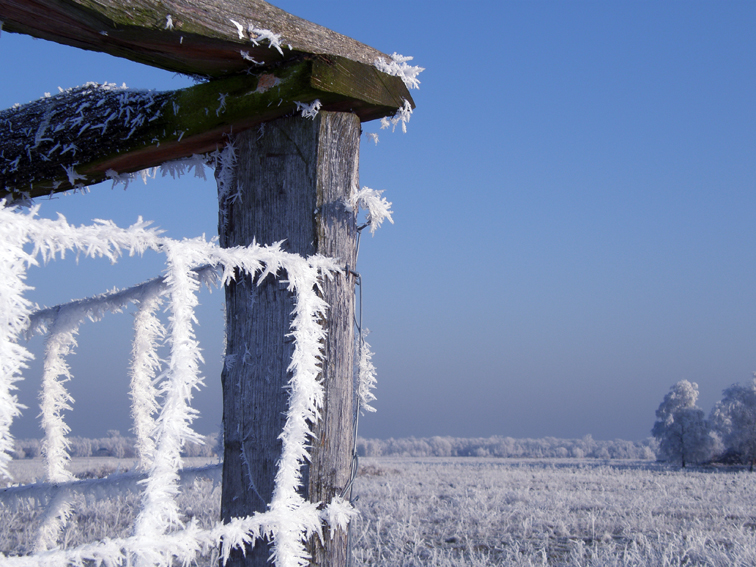 """""""Frost"""""""