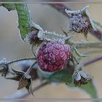 [Frost 6] Eis-Beeren