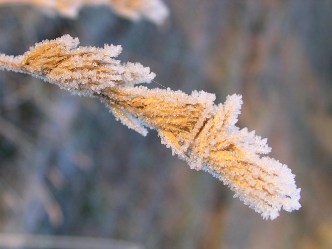 Frost on grass.