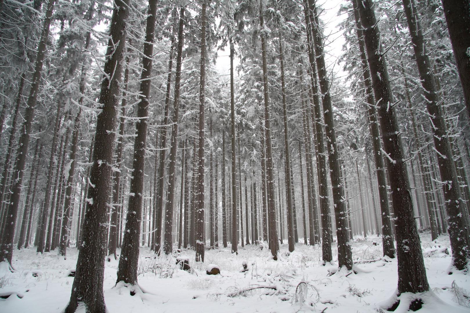 Frostgriff