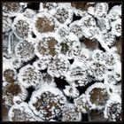 Frostholz