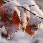 Frostig...