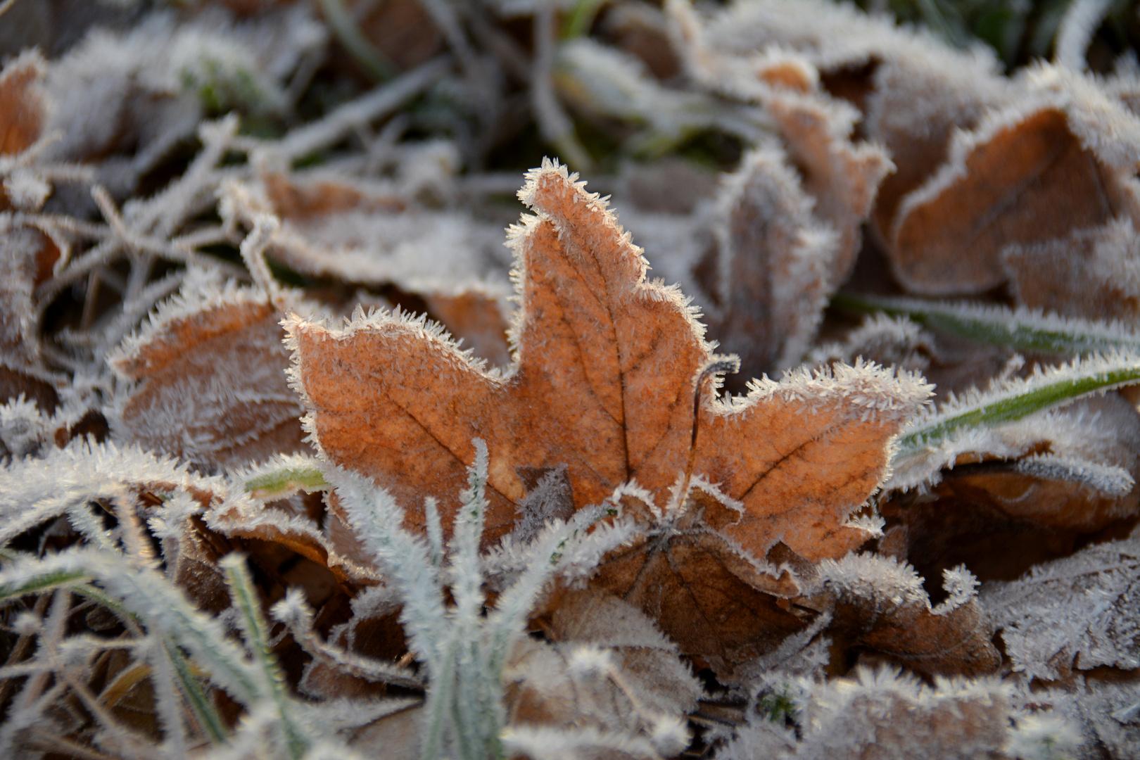 frostig kalt...