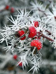 Frostig kalte Schönheit