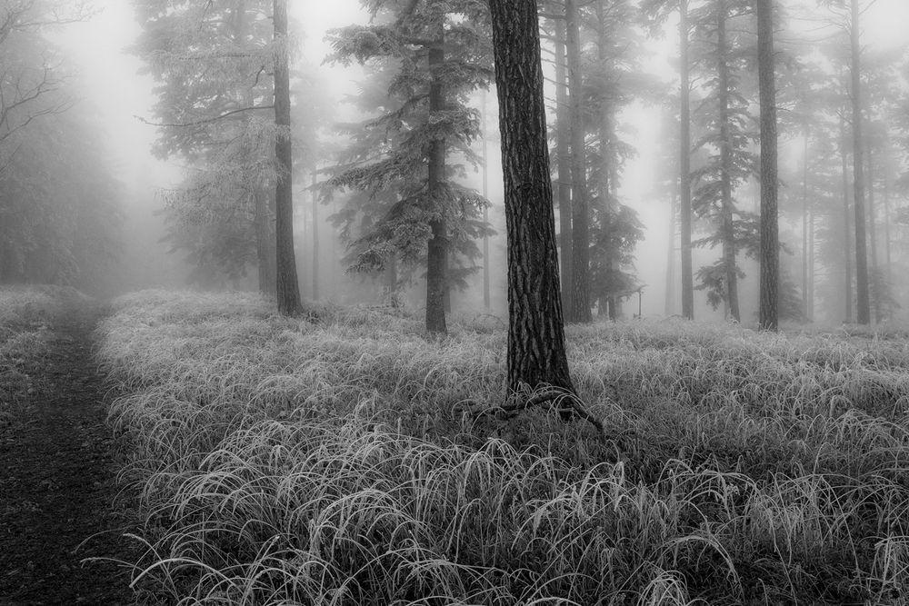 Frostig und trüb