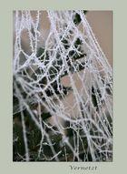 Frostige Momente_4