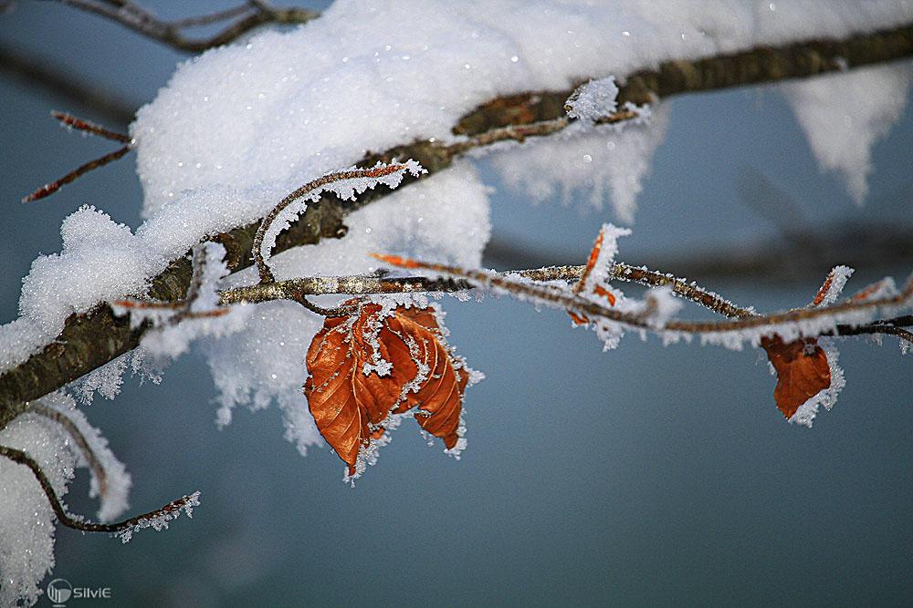 Frostige Winterschönheit
