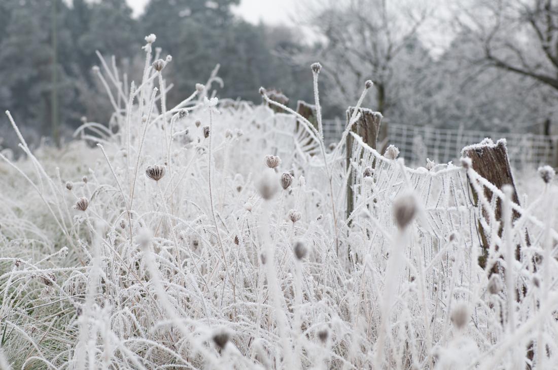 Frostige Zeiten 2
