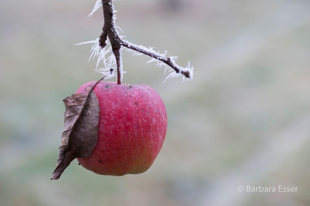Frostiger Apfel