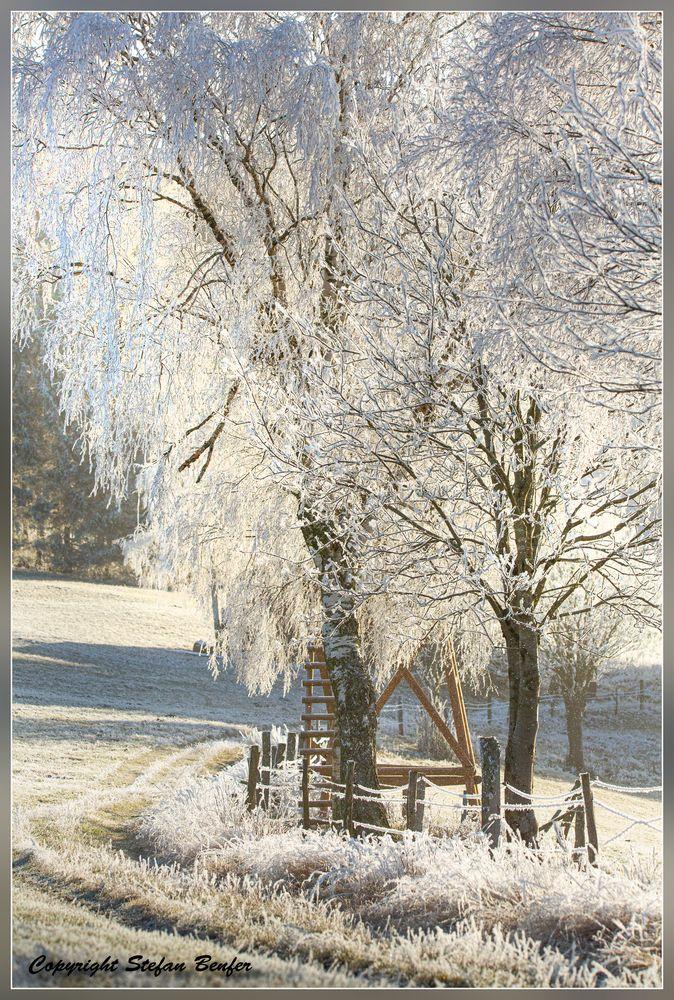Frostiger Morgen 2