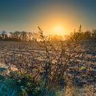 Frostiger Sonnenaufgang