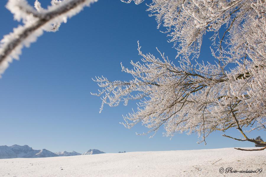 Frostiger Tag