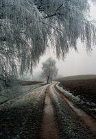 Frostiger Tag im Moos bei Maisach