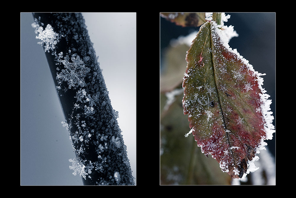 Frostiges...