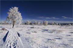 ~ frostiges Moor~