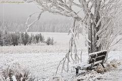 Frostiges Plätzchen ...