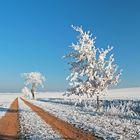 Frostkleid