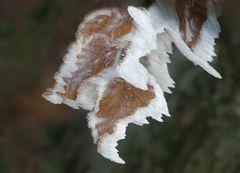 Frostkunst
