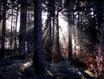 Frostmorgen am Waldstein
