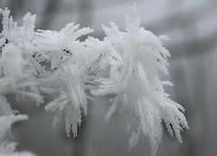 Frostskulpturen