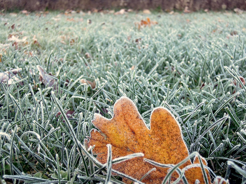 frosttage...die ersten