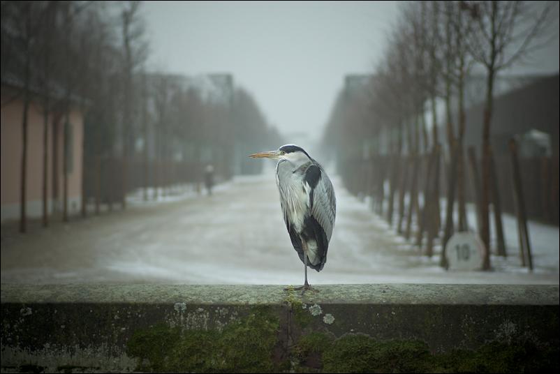 Frostvogel