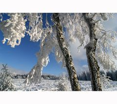 ~ frosty breeze ~