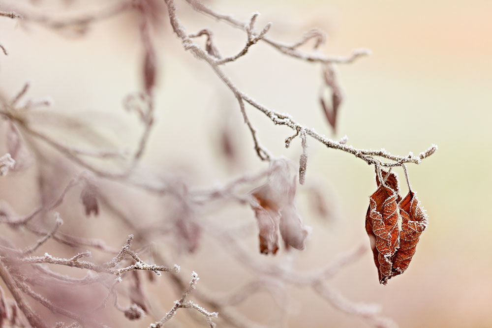 FROSTY LEAVES [01|COLOR]