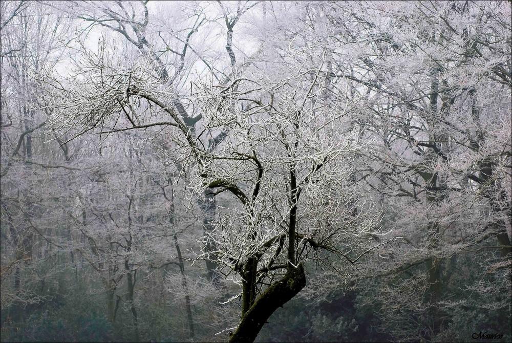 Frostzauber...