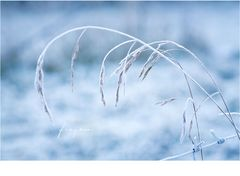 [ frozen ]
