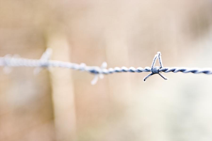 frozen barbed wire