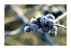 _frozen berries_
