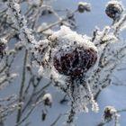 Frozen flower.