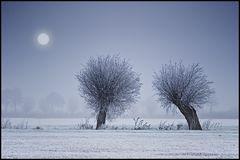 ~ Frozen II ~