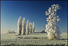 ~ Frozen IV ~