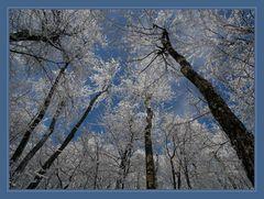 Frozen lungs...