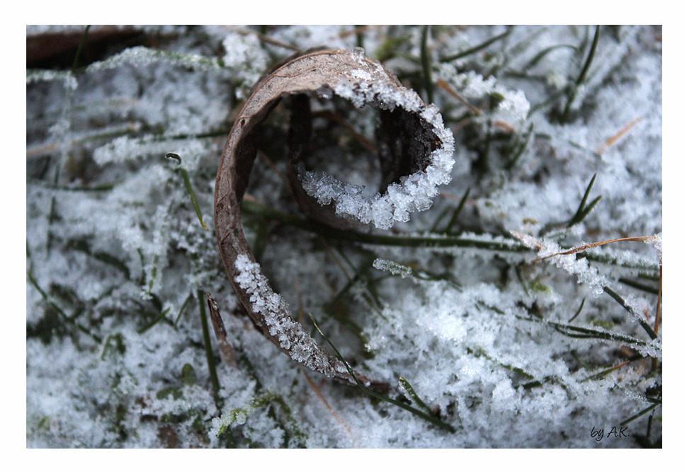 Frozen Magherita: Leaf - reload