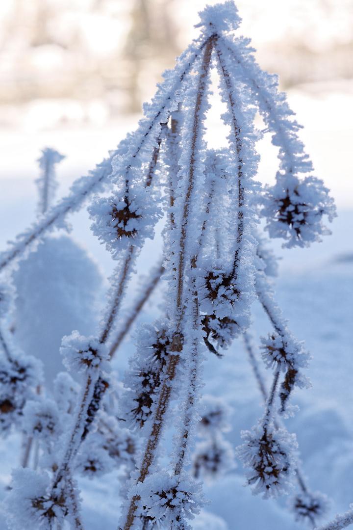 Frozen plant 2