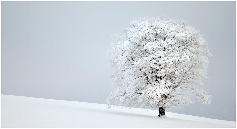 frozen stiff II