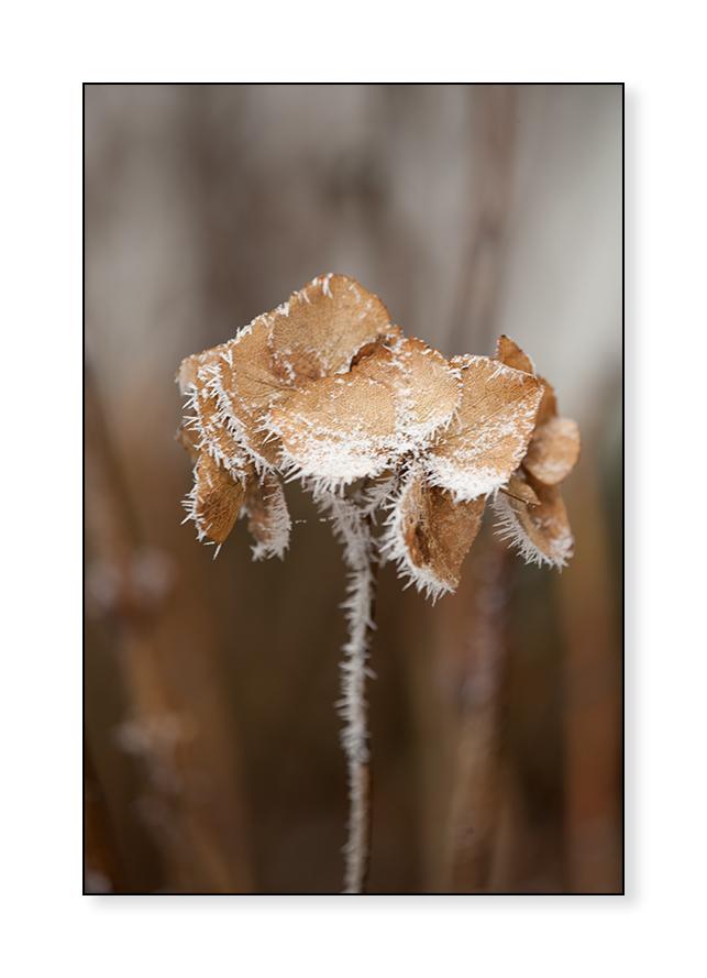 frozen stiff... II