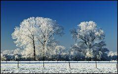 ~ Frozen V ~