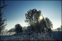 ~ Frozen X ~