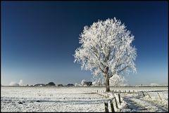 ~ Frozen XI ~