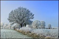 ~ Frozen XII ~