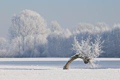 * Frozen XIV *