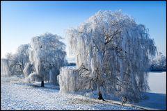 * Frozen XV *