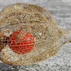 Frucht im kunstvollen Netz