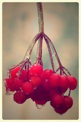Fruchteis-Eis auf Früchten