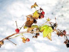 Fruchtige Winterzeit