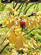 Fruchtiger Herbstgruß